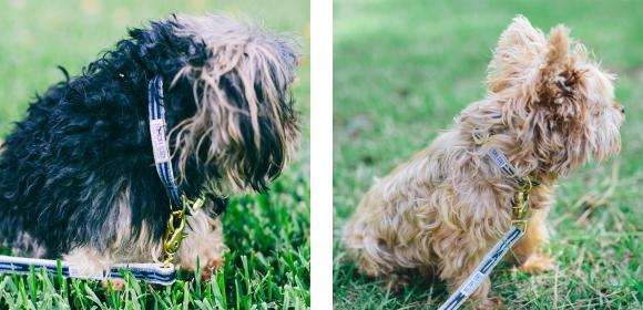 スタイリッシュでおしゃれな犬用リード|See Scout Sleep ヘンプリーシュ 幅1/2