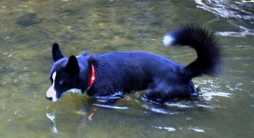 高い防水性・耐水性で海・川で泳げる|犬の交通安全ライト、光る首輪|LEDドッグカラー LEUCHTIE