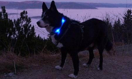 夜のお散歩におすすめ!|犬のライトLEUCHTIE Plusとは?|犬グッズ通販HAU