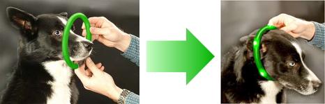 装着方法・使い方|犬の交通安全ライト、光る首輪|LED LEUCHTIE Plus(犬用セーフティーライト)|犬グッズ通販HAU
