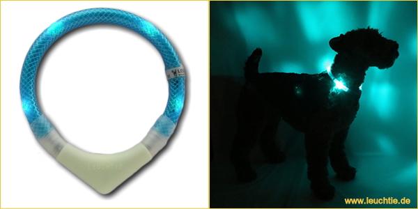 ターコイズ|犬の交通安全ライト、光る首輪|LEDドッグカラー LEUCHTIE Plus (犬用セーフティーライト)|犬グッズ通販HAU