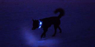100m先でも視認可能な強い光|犬の交通安全ライト、光る首輪|LEDドッグカラー LEUCHTIE Plus(犬用セーフティーライト)