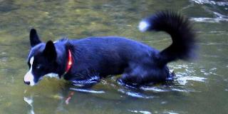 高い防水性・耐水性で海・川で泳げる|犬の交通安全ライト、光る首輪|LEDドッグカラー LEUCHTIE Plus