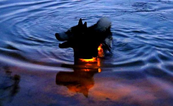 pro(プロ)の特徴|犬用LEDライト、夜のお散歩用交通安全グッズ、光る首輪 |犬グッズ通販HAU