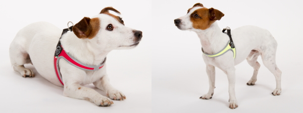 超小型犬、猫、小型犬用ハーネス|Fibbia Tre Ponti トレ・ポンティ|犬グッズ通販HAU