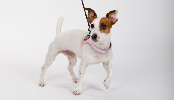 超小型犬、猫、小型犬用ハーネス|Liberta Tre Ponti トレ・ポンティ|犬グッズ通販HAU