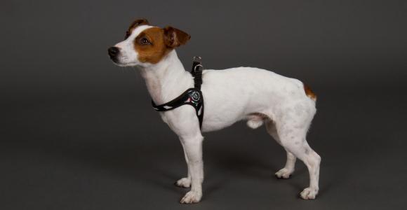 超小型犬、猫、小型犬用ハーネス|Fibbia-Fur Tre Ponti トレ・ポンティ|犬グッズ通販HAU