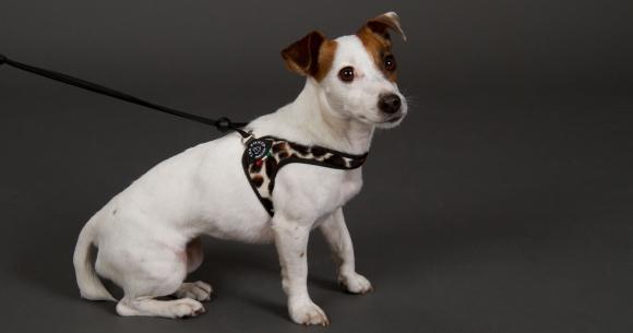 超小型犬、猫、小型犬用ハーネス|Liberta-Fur Tre Ponti トレ・ポンティ|犬グッズ通販HAU