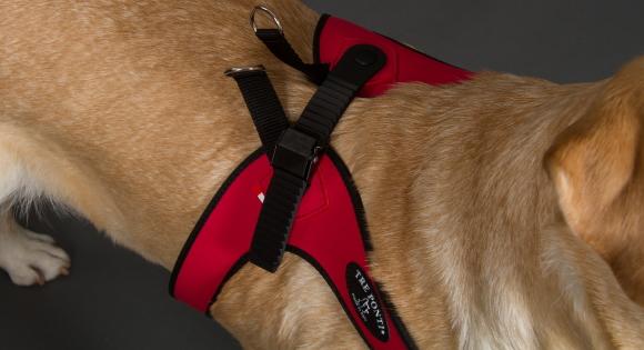 着脱簡単、サイズ調整簡単な中・大型犬用ハーネス|Sporza Tre Ponti|犬グッズ通販HAU