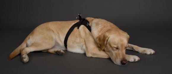 動きやすいおすすめの犬用ハーネス|sporza|犬グッズ通販HAU