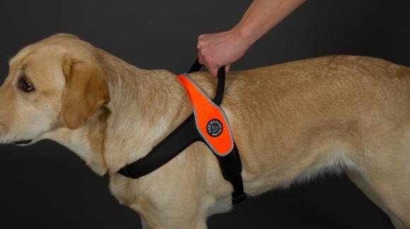 便利なハンドルで引っぱりを止める|中・大型犬用ハーネス|Primo Tre Ponti|犬グッズ通販HAU