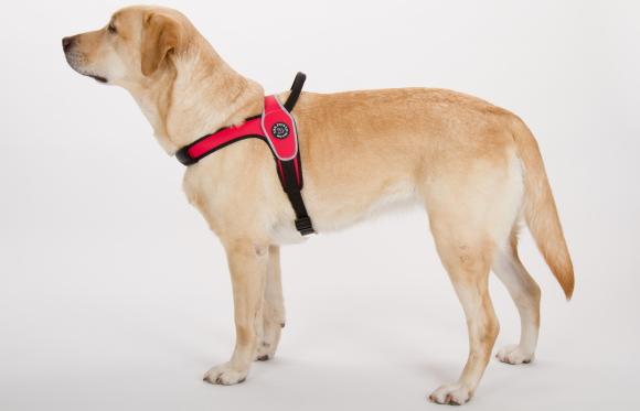 ハーネスの着け方|中・大型犬用ハーネス|Primo Tre Ponti|犬グッズ通販HAU