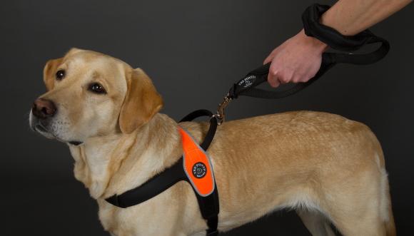 中・大型犬用リード|ダブルセーフティーハンドルリーシュ|犬グッズ通販HAU