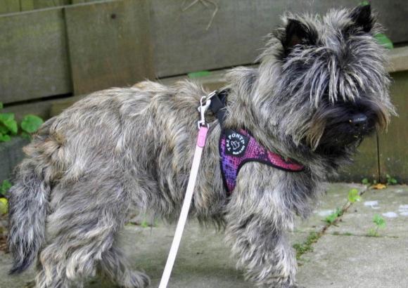 超小型犬、猫、小型犬用ハーネス|Fibbia-Python Tre Ponti トレ・ポンティ|犬グッズ通販HAU