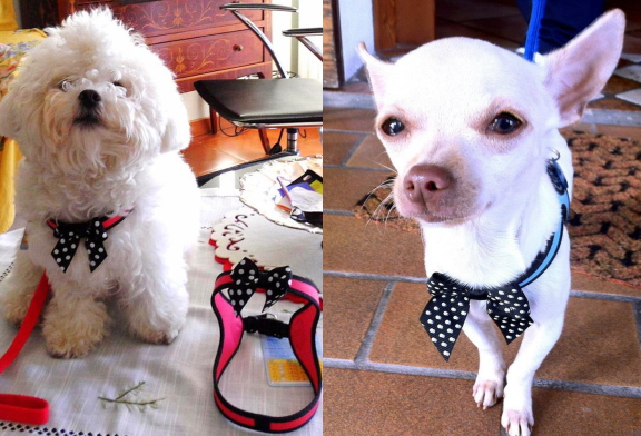 イタリア製のおすすめ超小型犬・小型犬用ハーネス| Tre Ponti トレ・ポンティ|犬グッズ通販HAU