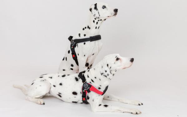 中型犬・大型犬用ハーネス Brio ブリオ Tre Ponti トレ・ポンティ|元気な犬にぴったりのハーネス|犬グッズ通販HAU