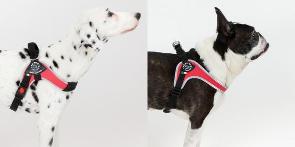 中型犬・大型犬用ハーネス Brio ブリオ Tre Ponti トレ・ポンティ|人気のFibbiaを大型犬用ハーネスとしてリデザイン|犬グッズ通販HAU