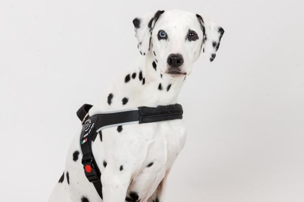 厚みのあるソフトパッド|中型犬・大型犬用ハーネス Brio ブリオ Tre Ponti トレ・ポンティ|犬グッズ通販HAU