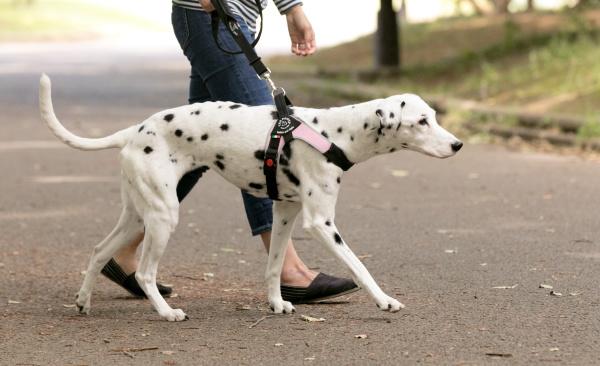 ダブルセーフティーハンドルリーシュ|中型犬・大型犬用ハーネス Brio ブリオ Tre Ponti トレ・ポンティ|犬グッズ通販HAU