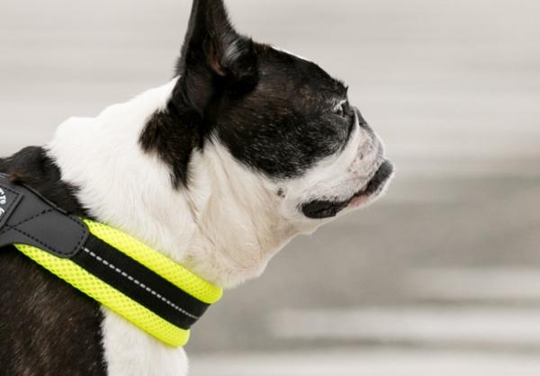 のど・首にやさしいクッション犬用ハーネス|Fibbia ソフトメッシュアジャスタブル|犬グッズ通販HAU