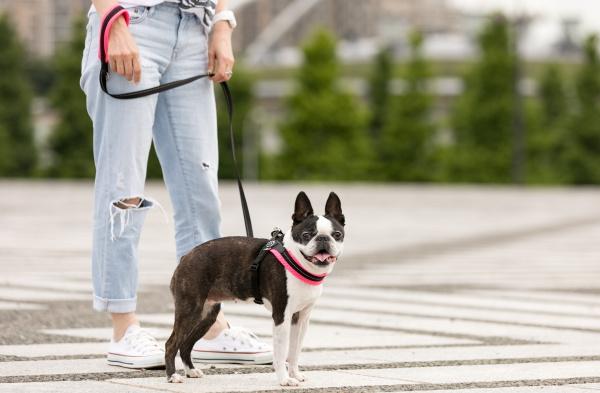 愛犬とおそろいの小型犬用リード|ソフトメッシュリーシュ  トレ・ポンティ Tre Ponti|犬グッズ通販HAU