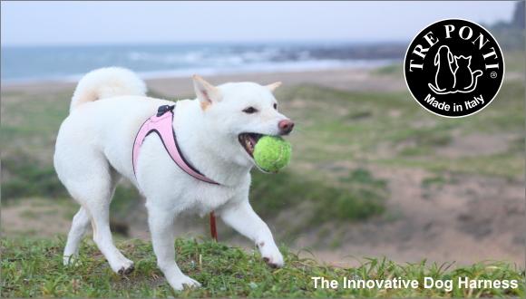 Tre Ponti (トレポンティ)|イタリア製犬用ハーネス|犬グッズ通販HAU