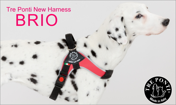 中型犬用・大型犬におすすめのドッグハーネスbrio(ブリオ)|Tre Ponti トレポンティ|犬グッズ通販HAU