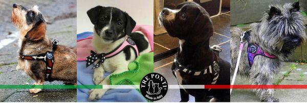 トレ・ポンティファッションライン Tre Ponti|おしゃれな小型犬用ハーネス|犬グッズ通販HAU